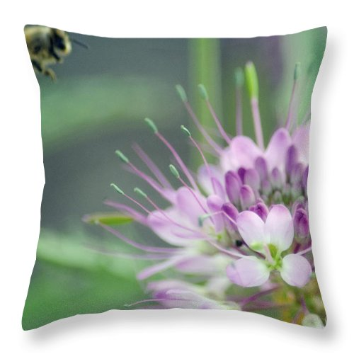 Bees Throw Pillow featuring the photograph Incoming Bee by Donna Greene
