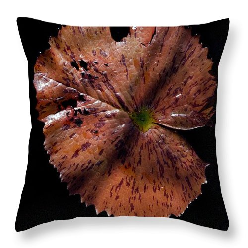 Brazillian Water Lilly Throw Pillow featuring the photograph Ink by Joseph Yarbrough