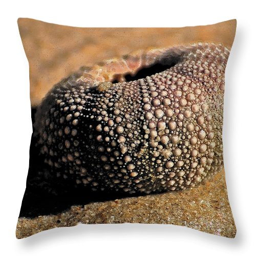 Sea Urchin Throw Pillow featuring the photograph Inked Urchin by Jean Booth