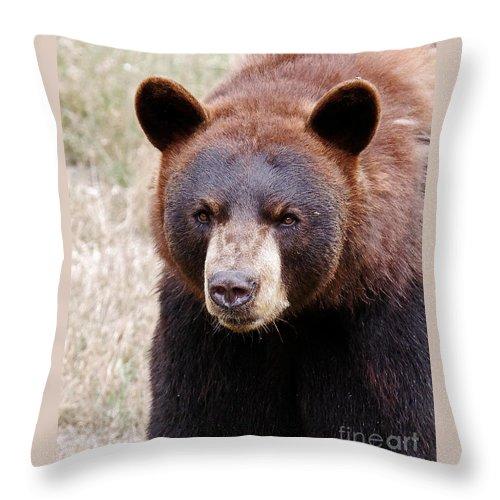 Bear Throw Pillow featuring the photograph Intense by Lloyd Alexander