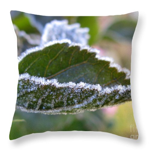 Flower Throw Pillow featuring the photograph Intensify by Tina Marie