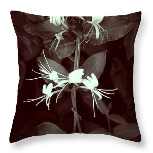 Intertwined Throw Pillow featuring the photograph Intertwined by Nina Fosdick