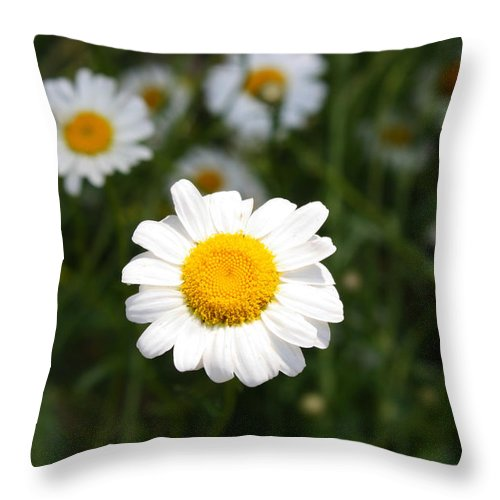 Daisy Throw Pillow featuring the photograph Isn't That A Daisy by Tony Cooper