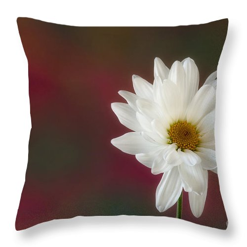 White Flower Throw Pillow featuring the photograph Isolation by Susan Candelario