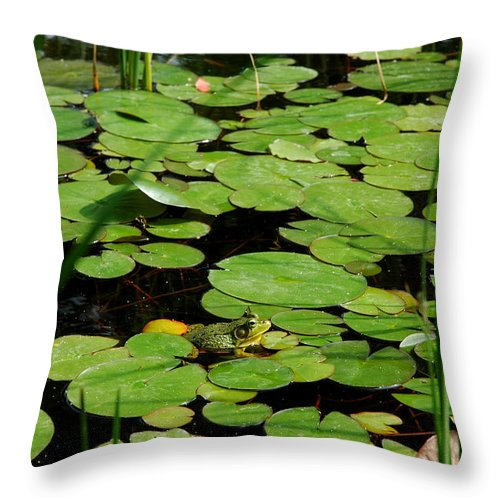 Usa Throw Pillow featuring the photograph It Is Not Easy Being Green by LeeAnn McLaneGoetz McLaneGoetzStudioLLCcom