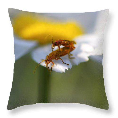 Bugs Throw Pillow featuring the photograph It Takes Two by Sharon Talson