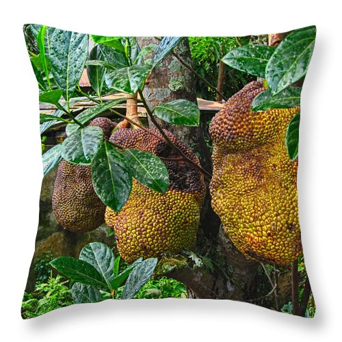 Asia Throw Pillow featuring the photograph Jack Fruit by Mark Sellers