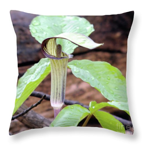 Green Throw Pillow featuring the photograph Jack-in-the-pulpit by Ronald Grogan