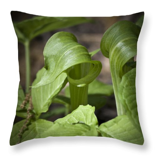 Arisaema Triphyllum Throw Pillow featuring the photograph Jack In The Pulpit by Teresa Mucha