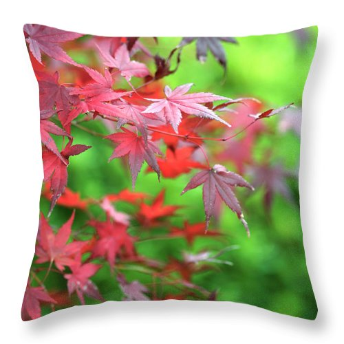 Acer Palmatum Throw Pillow featuring the photograph Japanese Maple Leaves by Neil Overy