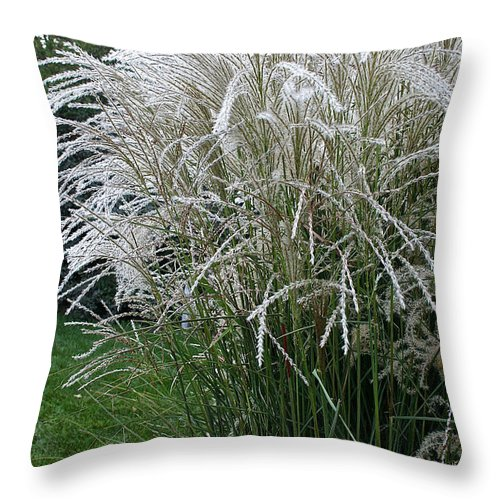 Landscape Throw Pillow featuring the photograph Japanese Silver Grass Full Height by Susan Herber