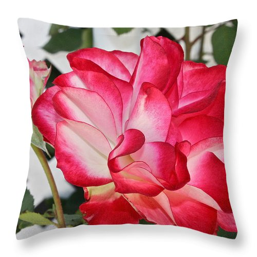 Flowers Throw Pillow featuring the photograph Jean's Roses by Diana Hatcher