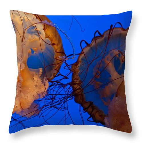 Jellyfish Throw Pillow featuring the photograph Jelly Roll by Sheri Bartoszek
