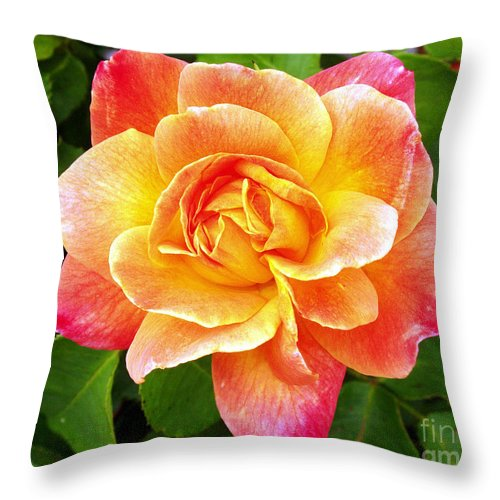 Joseph Throw Pillow featuring the photograph Joseph's Coat Rose by Kevin Pugh