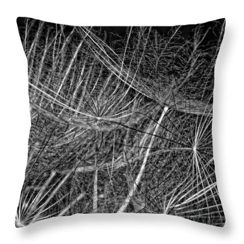 Asteraceae Throw Pillow featuring the photograph Journey Inward Monochrome by Steve Harrington