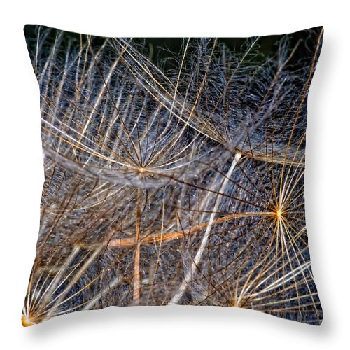 Asteraceae Throw Pillow featuring the photograph Journey Inward by Steve Harrington