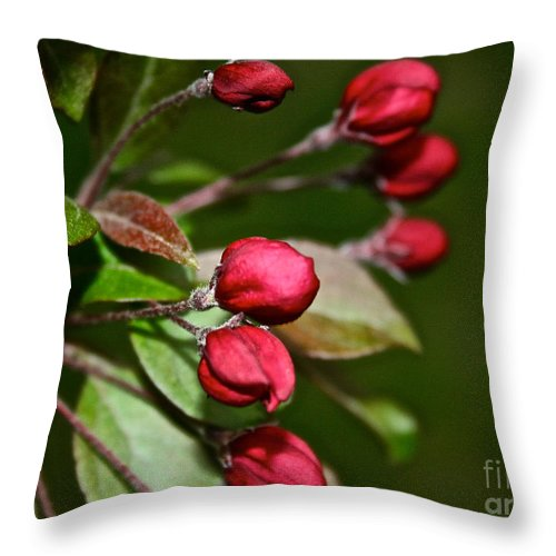 Plant Throw Pillow featuring the photograph Just Add Sun by Susan Herber
