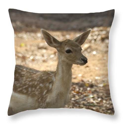 Juvenile Deer Throw Pillow featuring the photograph Juvenile Deer by Douglas Barnard