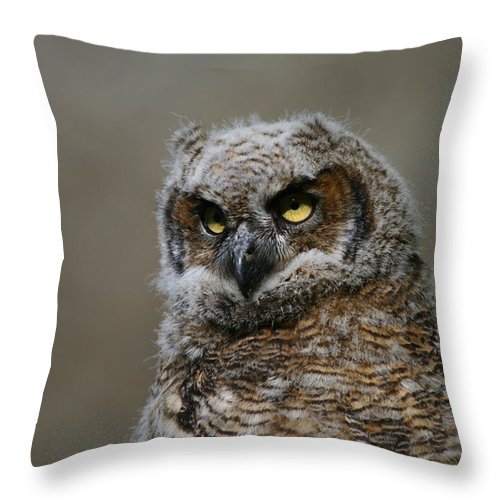 Alaska Throw Pillow featuring the photograph Juvenile Great Horned Owl by Doug Lloyd