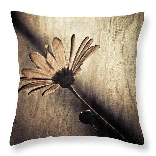 Kardashian Throw Pillow featuring the photograph Kardashian by Trish Tritz