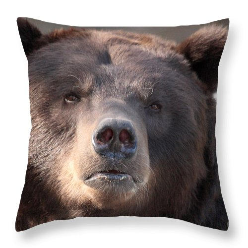 Animal Throw Pillow featuring the photograph Keep Your Eye On The Camera by Alan Look