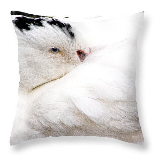White Bird Throw Pillow featuring the photograph Keeping Warm by Burney Lieberman