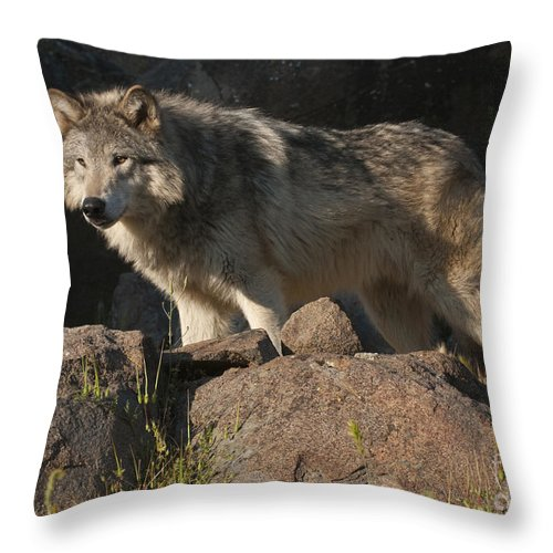 Bronstein Throw Pillow featuring the photograph Keeping Watch by Sandra Bronstein
