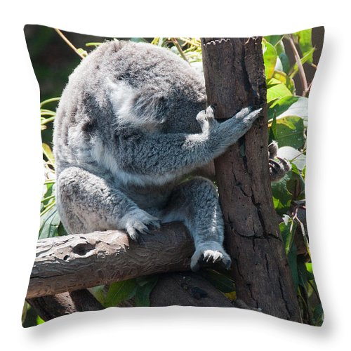Animals Throw Pillow featuring the digital art Koala by Carol Ailles