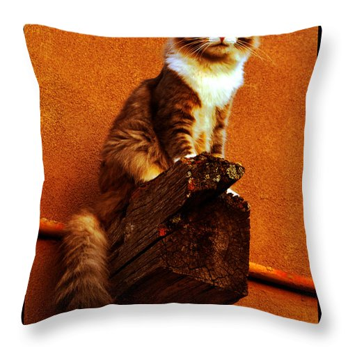 Cat Portrait Throw Pillow featuring the photograph Kobe On Viga by Susanne Still