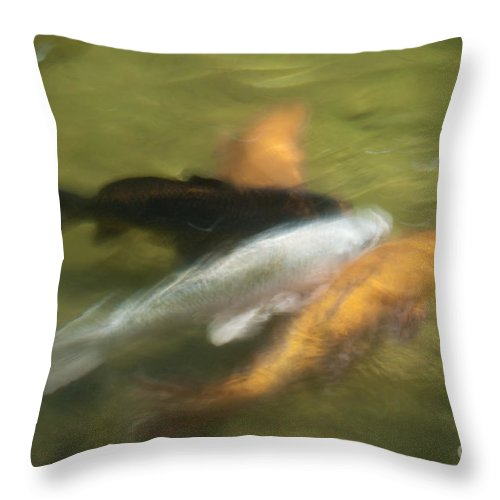 Fish Throw Pillow featuring the photograph Koi Fish 05 by Catherine Lau