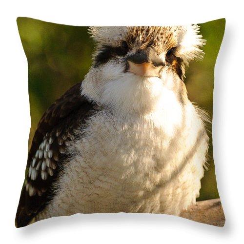 Kookaburra Throw Pillow featuring the photograph Kookaburra by Michael Nau