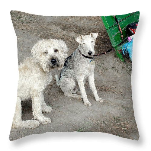 White Dogs Throw Pillow featuring the photograph Ladies In Waiting by Burney Lieberman