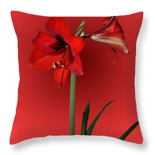 Amaryllis Throw Pillow featuring the photograph Lady In Red by Kristin Elmquist