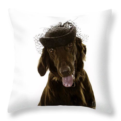 Flat Coated Retriever Throw Pillow featuring the photograph Lady Lilly Detail by Angel Ciesniarska