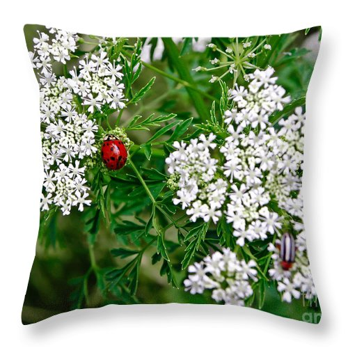 Ladybug Throw Pillow featuring the photograph Ladybug by Tisha Clinkenbeard