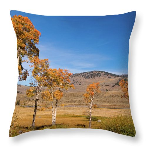 Yellowstone Throw Pillow featuring the photograph Lamar Valley Aspens by Steve Stuller