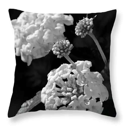 Lantana Throw Pillow featuring the photograph Lantana In Black And White by Betty LaRue