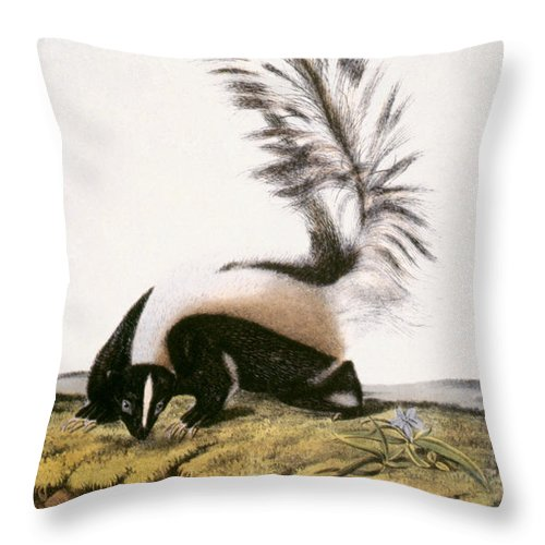 1846 Throw Pillow featuring the photograph Large Tailed Skunk by Granger