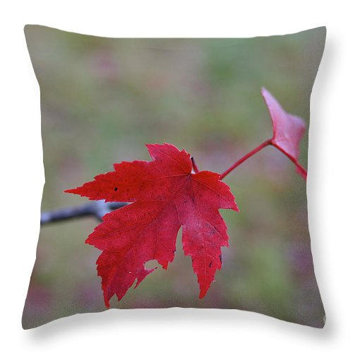 Outdoors Throw Pillow featuring the photograph Last Leaves by Susan Herber