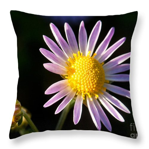 Daisy Throw Pillow featuring the photograph Last Ray Of Sun by Jim Moore