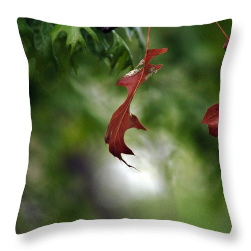 Leaves Throw Pillow featuring the photograph Last To Fall by Wanda Brandon