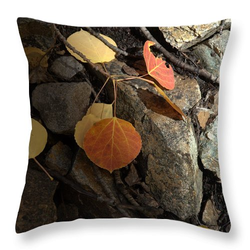 Fall Throw Pillow featuring the photograph Last Vestige Of Fall by Jerry McElroy
