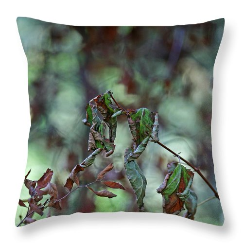 Autumn Throw Pillow featuring the photograph Late September Leaves by Bonnie Bruno