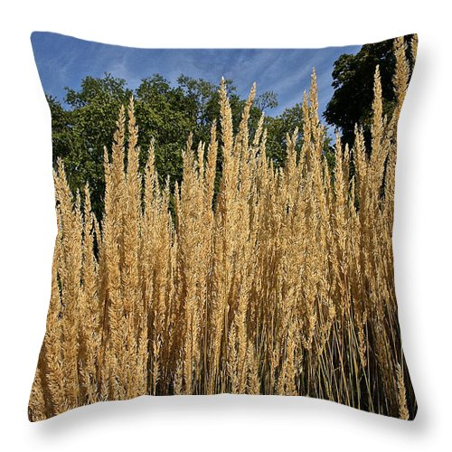 Outdoors Throw Pillow featuring the photograph Late Summer Colors by Susan Herber