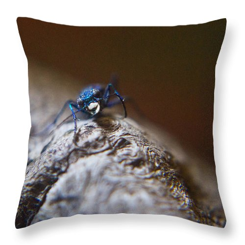 Laughing Throw Pillow featuring the photograph Laughing Cincindellidae by Douglas Barnett