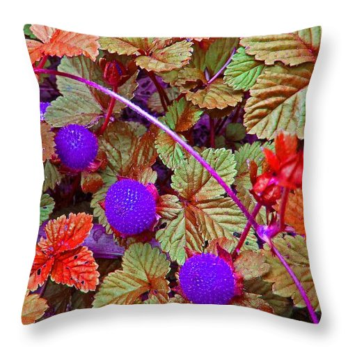 Berry Throw Pillow featuring the photograph Lavender Berry by Tracy Long