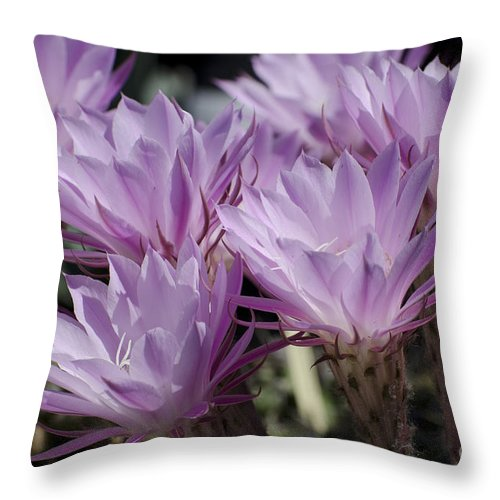 Cactus Throw Pillow featuring the photograph Lavender Cactus Flowers by Jim And Emily Bush