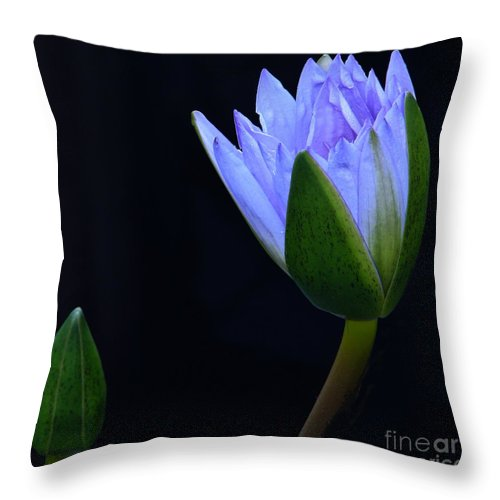 Tropical Water Lily Throw Pillow featuring the photograph Lavender Delight by Byron Varvarigos