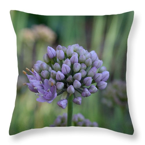Outdoors Throw Pillow featuring the photograph Lavender Flowering Onion by Susan Herber