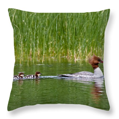 Merganser Throw Pillow featuring the photograph Lazy Swim by Brent L Ander